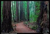 cathedral grove -2